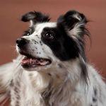 Victoria Swiger Profile Picture