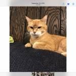 Angel Briatto Profile Picture
